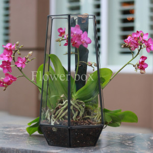 Hộp kính hoa - FBTB 035