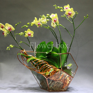 Hộp kính hoa - FBTB 067