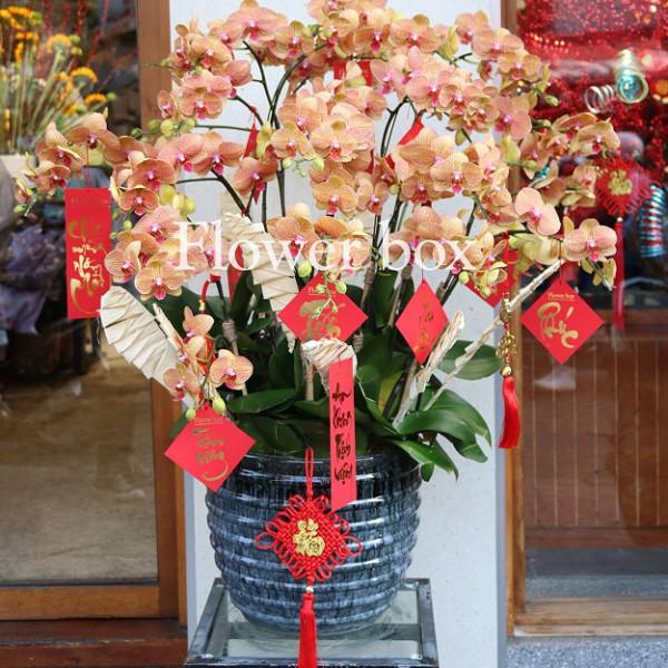 Lan Hồ Điệp cam sọc 20 cành - FBOR 065