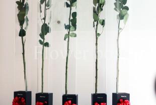 HOA HỒNG 1,6M HÚT KHÁCH SÀI GÒN TẠI FLOWER BOX
