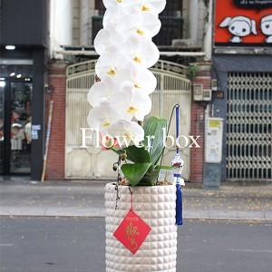 Lan Hồ Điệp trắng 1 cành - FBOR 028