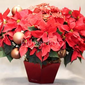 Bình Hoa Giáng Sinh - FBEV 011