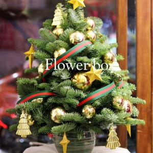 Cây Thông Giáng Sinh - FBEV 005